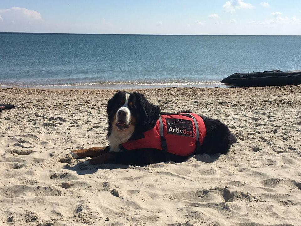 Спасательный жилет для собак ActivDog, размер XL-XXL (для больших собак)