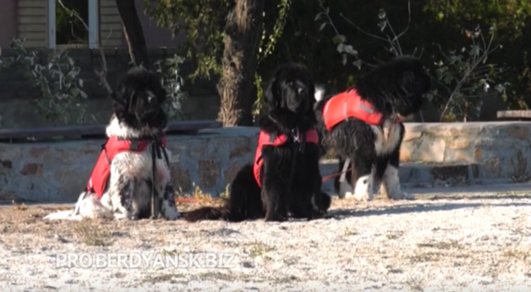 На Азовском море открыта школа по подготовке  собак-спасателей на воде.