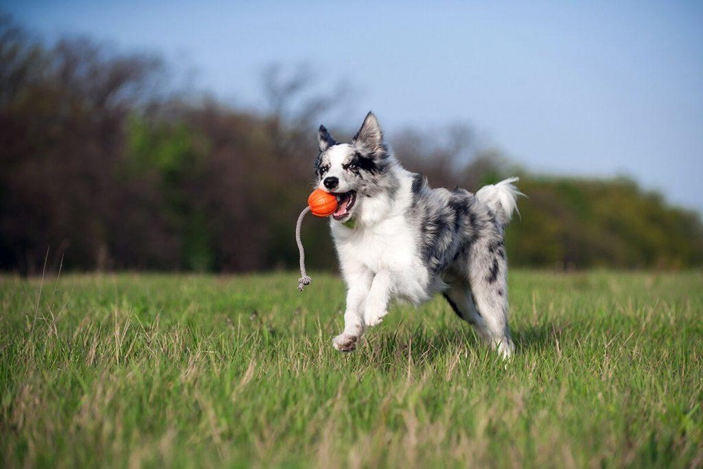 Liker Cord мячик для собак со шнуром